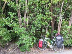 auf zum spaziergang in den busch